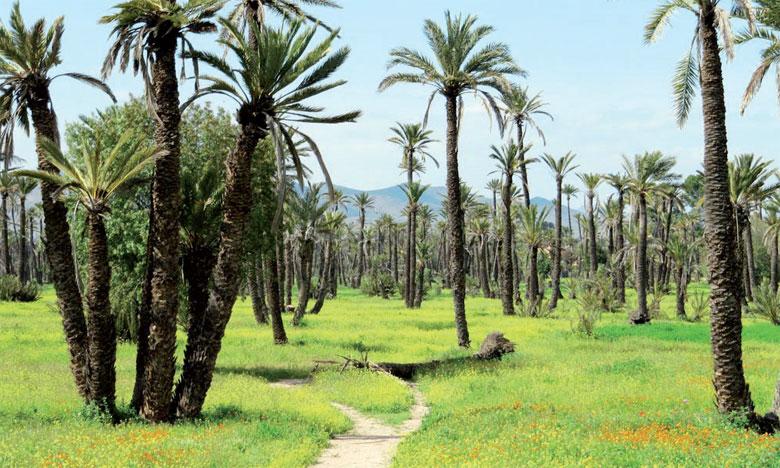 Le marais Oulja de la Palmeraie est la dernière zone humide de la région aride  de Marrakech.