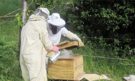 Le secteur de l'apiculture s'organise