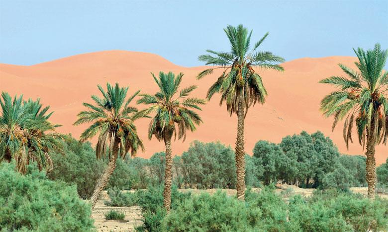 L'agroécologie oasienne est une pratique qui permet de combattre  la désertification et ses lourdes conséquences écologiques et sociales.