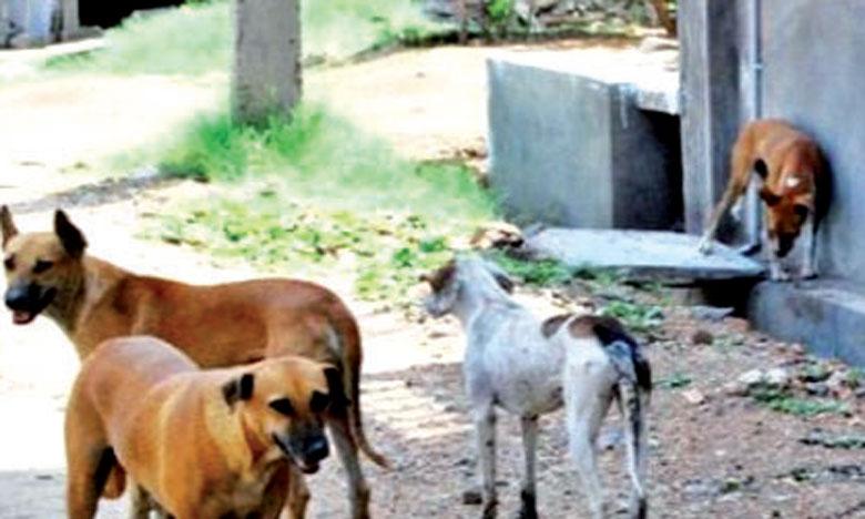 Les autorités concernées ont attrapé l'année dernière plus de 15.000 animaux.