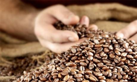 Café: doublement de la consommation en 20 ans,  selon les professionnels du secteur
