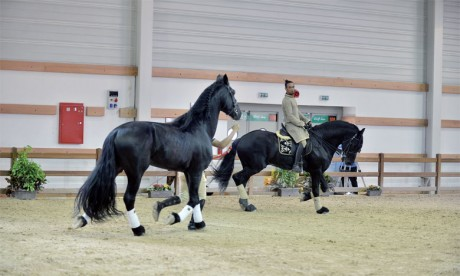 Grande affluence au salon du cheval