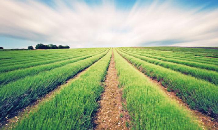 Les subventions accordées par le fonds de développement agricole ont dépassé la barre des 100 millions de centimes.