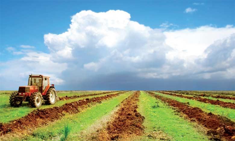 La superficie agricole utile dans la province de Safi est de 349.835ha, répartis entre 48.182 agriculteurs.