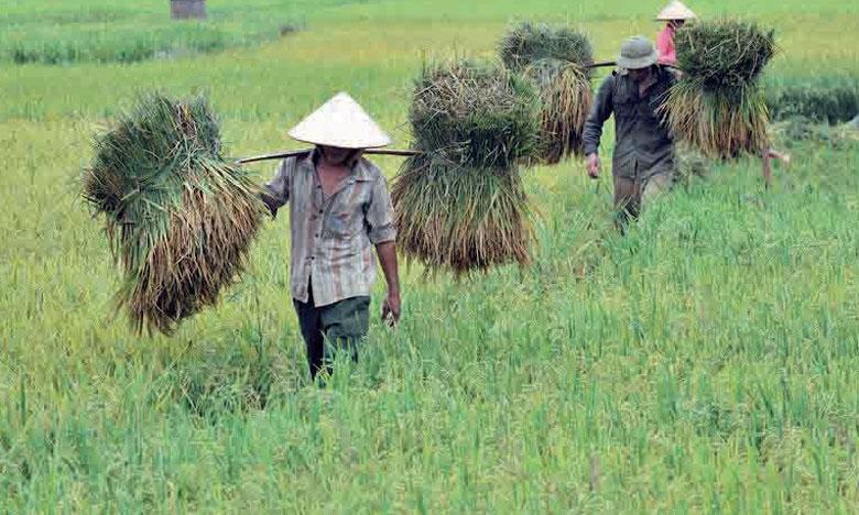 La FAO montre que si aujourd'hui les récoltes céréalières sont à des niveaux record, leur base productive est de plus en plus précaire face à l'épuisement des eaux souterraines, à la pollution et à la perte de biodiversité.