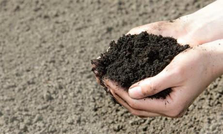 Un colloque scientifique aujourd'hui à Rabat pour relever le défi de la fertilité des sols