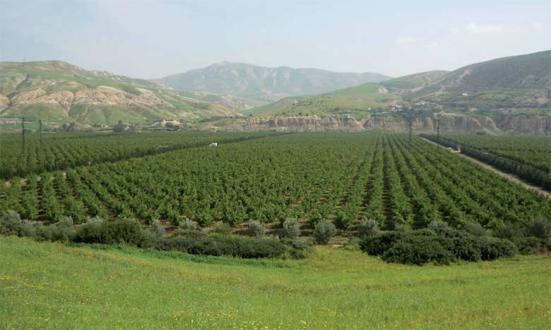 Le projet de sauvegarde des zones irriguées de la plaine de Saiss porte sur plus de 22.000 hectares.