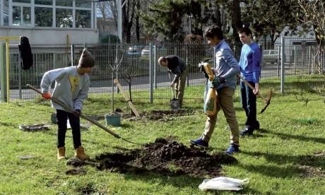 Opération de plantation d'arbres  pour la protection de l'environnement