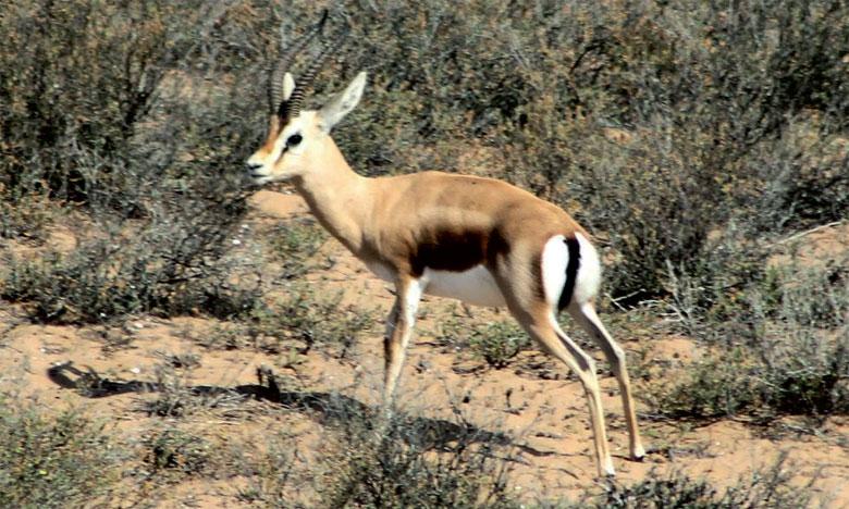 À fin 2012, près de 1.200 espèces au Maroc se trouvaient sur la liste rouge de l'Union internationale pour  la conservation de la nature.