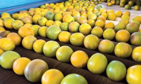 Brésil: chute de la récolte d'oranges, la France craint de manquer de jus
