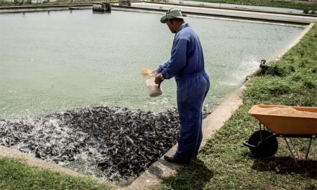 La part des personnes employées dans la pêche de capture a diminué, tombant de 83% en 1990 à 67% en 2014, tandis que celle des personnes employées dans  l'aquaculture augmentait d'autant, passant de 17 à 33%.