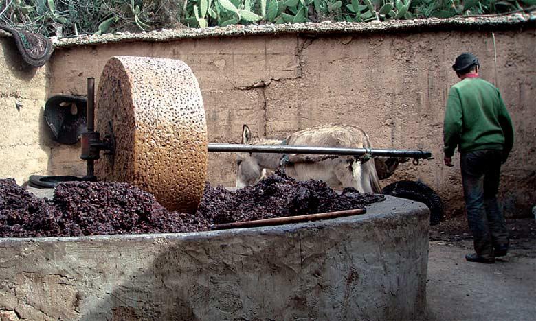 Les unités de trituration d'olives  tournent à plein régime