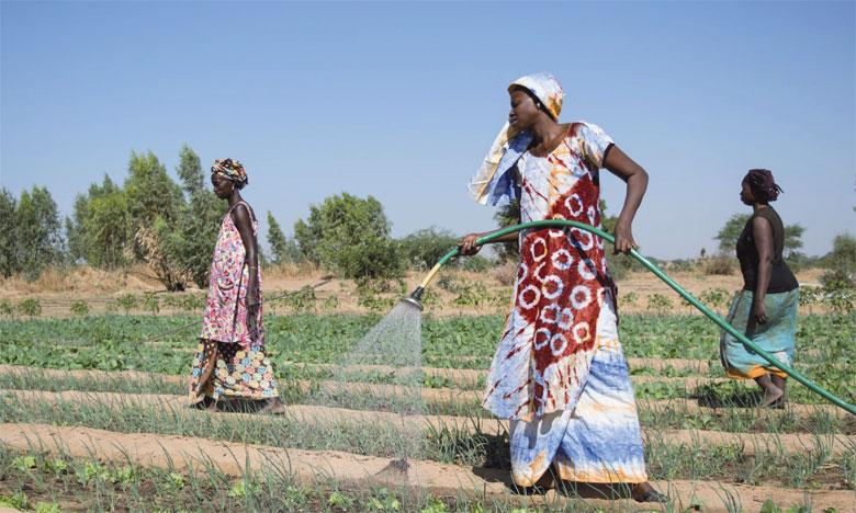 La FAO note qu'en dépit de la disponibilité des aliments, plusieurs pays de la région restent toujours fortement dépendants des importations alimentaires.
