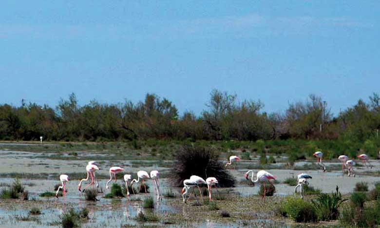 Le Maroc compte actuellement 24 sites inscrits sur la liste des zones humides d'importance internationale qui s'étalent sur 272.010 hectares.