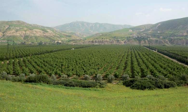 Les Assises de l'agriculture feront le point sur ce qui est considéré comme «l'or bleu», avec comme objectif principal de sensibiliser les opérateurs agricoles sur l'impératif d'une gestion hydrique efficiente des impératifs environnementaux. Ph : DR