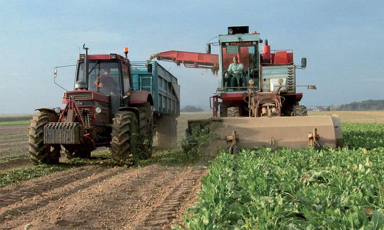 En s'appuyant sur la R&D, la filière sucrière ambitionne d'atteindre à court terme un rendement en sucre à l'hectare de 14 tonnes.