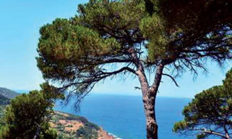 D'une rare beauté, le parc de Perdicaris de Tanger, ou forêt Rmilate, constitue une richesse biologique et écologique inestimable.