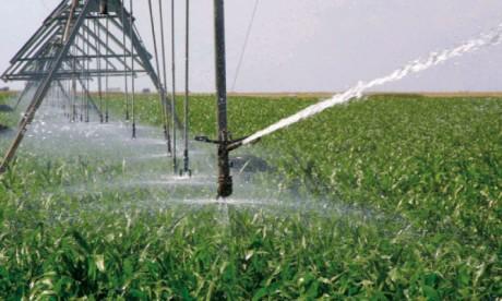 Au Maroc, l'irrigation contribue en moyenne à hauteur de 99% pour la production de sucre, 82% pour les cultures maraîchères, 100% pour les agrumes, 75% pour les fourrages et 75% pour le lait.