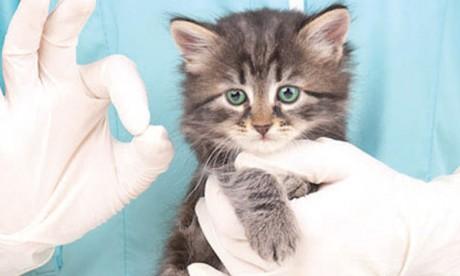 Seulement 6% des foyers français ayant un animal sont assurés contre 30% par exemple en Grande-Bretagne. Et en Scandinavie, jusqu'à 80% des chiens  et 50% des chats sont couverts.