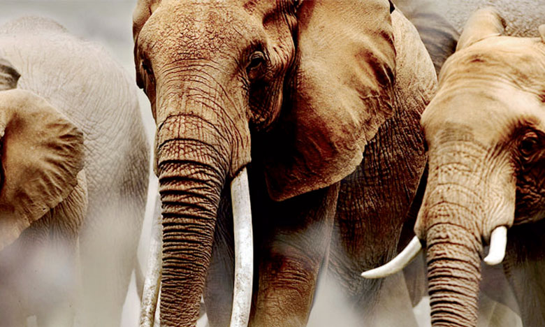 Les conflits opposant les êtres humains à la faune sont devenus de plus en plus fréquents, surtout en Afrique, en raison  de la concurrence pour les terres.