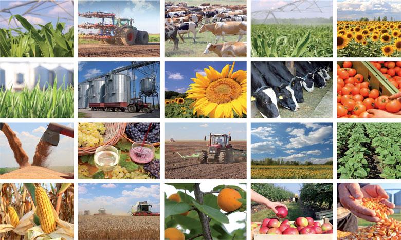 Agro-industrie et agriculture durable:  le modèle marocain à l'honneur
