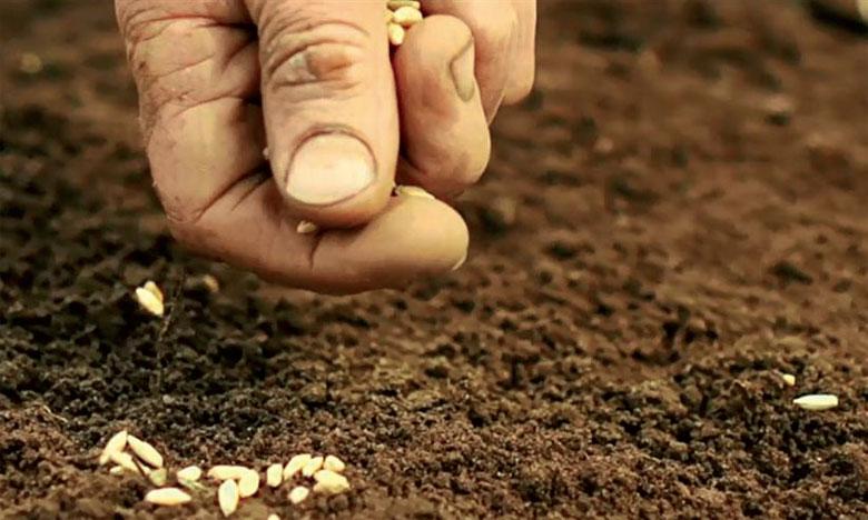 L'analyse du risque phytosanitaire doit avant tout déterminer l'objectif de l'exportation des semences, l'impact économique n'étant pas le même s'il s'agit de plantation de champs, de recherche scientifique ou de tests.