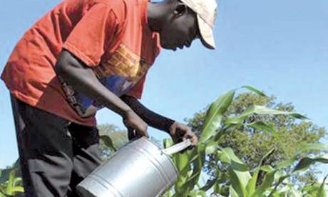 La BAD veut réconcilier les jeunes Africains avec l'agriculture