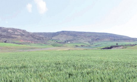La région d'Ifrane, un pôle agricole  au cœur du Maroc