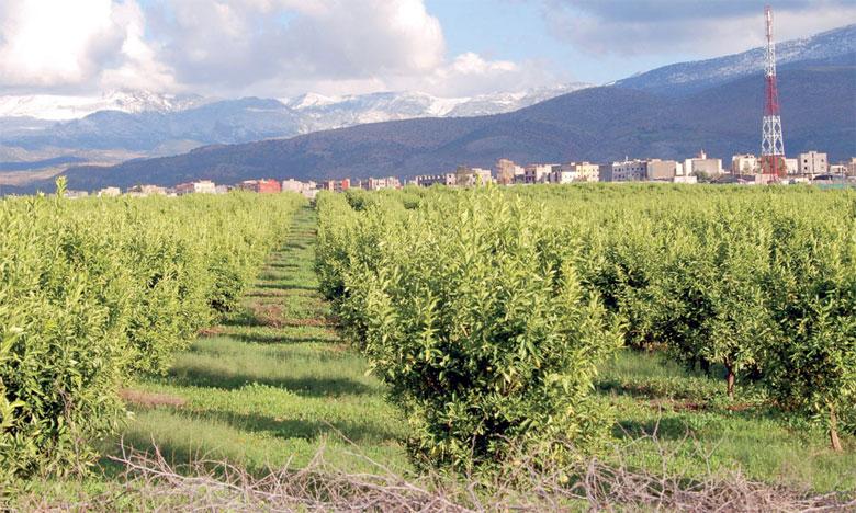 Dans la région d'Azilal, le département de l'Agriculture planche sur deux unités de concassage  et de transformation des récoltes de cette zone.