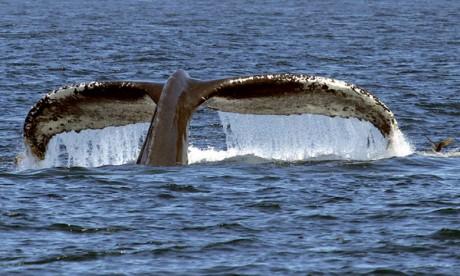 Le premier rapport des sciences océaniques  présenté le 8 juin à New York