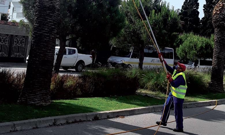 Un agent de l'ONSSA procédant au traitement préventif contre le charançon rouge de palmier à Tanger le 17 mai2017.