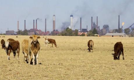 Les nouvelles recommandations de  la FAO pour intégrer le secteur agricole
