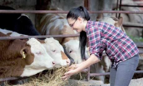 Le statut de l'auto-entrepreneur sera élargi aux jeunes du monde rural