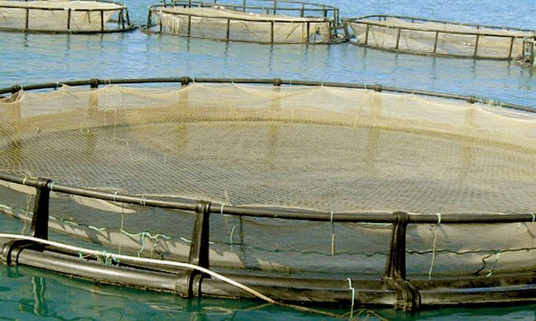 Les projets retenus portent sur l'exploitation de 2.330ha pour produire 78.000 tonnes de produits aquacoles.