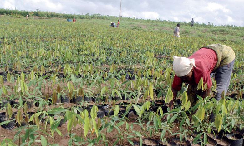 Selon la FAO, les salaires demeurent faibles en milieu rural alors qu'en Afrique l'agriculture est le premier secteur pourvoyeur d'emplois. Ph. AFP.