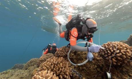 Le blanchissement massif des coraux  atteint l'ensemble du Pacifique
