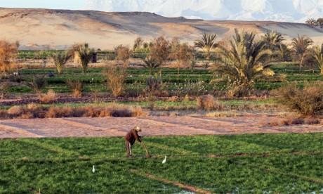 Pas moins de 65.000 tonnes de produits végétaux sont cultivés par an, dont 44.000 tonnes de tomates-cerises et 20.000 tonnes de melon.