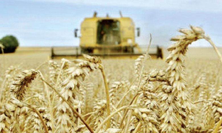 En raison du changement climatique en Afrique, la production de blé pourrait enregistrer  une baisse de 10 à 20% d'ici à 2030, comparé aux rendements des années 1998-2002.