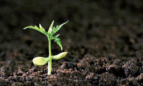La Journée mondiale des sols célébrée aujourd'hui