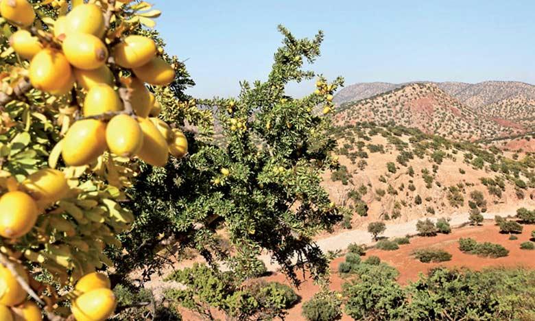 Le Maroc, dépositaire universel de l'arganier, a choisi l'arganeraie comme milieu naturel à partir duquel seront calculés les bénéfices monétaires qu'offre un écosystème sans porter atteinte à sa richesse en biodiversité.  Ph. DR
