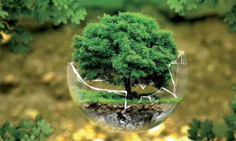 L'un des objectifs du Congrès mondial de la nature est de ramener à près de zéro d'ici à 2020 le rythme  d'appauvrissement de tous les habitats naturels, y compris les forêts.Ph. DR