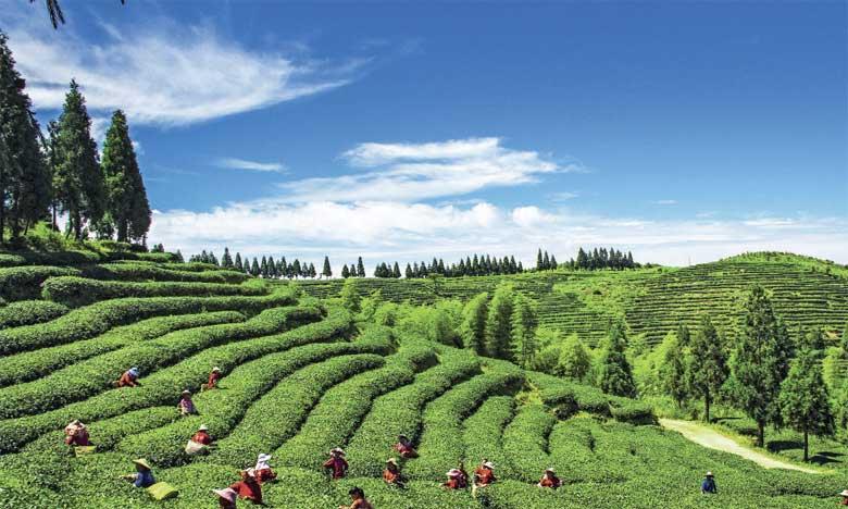 En Corée du Sud, c'est la culture du thé, qui nécessite une intervention humaine minimale en symbiose étroite  avec la nature, qui a été honorée. Ph. DR.
