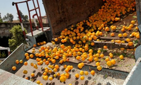 La Banque mondiale apporte son soutien à l'agroalimentaire marocain