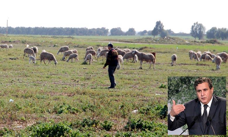 Les mesures prioritaires d'Akhannouch  pour faire face au retard des précipitations