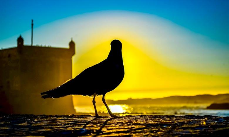 Durant les dix premiers mois de 2017, Essaouira a enregistré une hausse de 9% de ses nuitées déclarées par rapport à la même période de l'année 2016, et une hausse de 11% de ses arrivées, selon la Direction provinciale du tourisme. Ph : DR