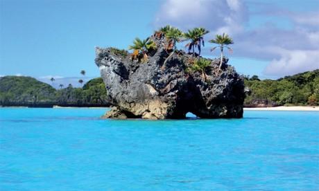 Début de l'année internationale des récifs coralliens