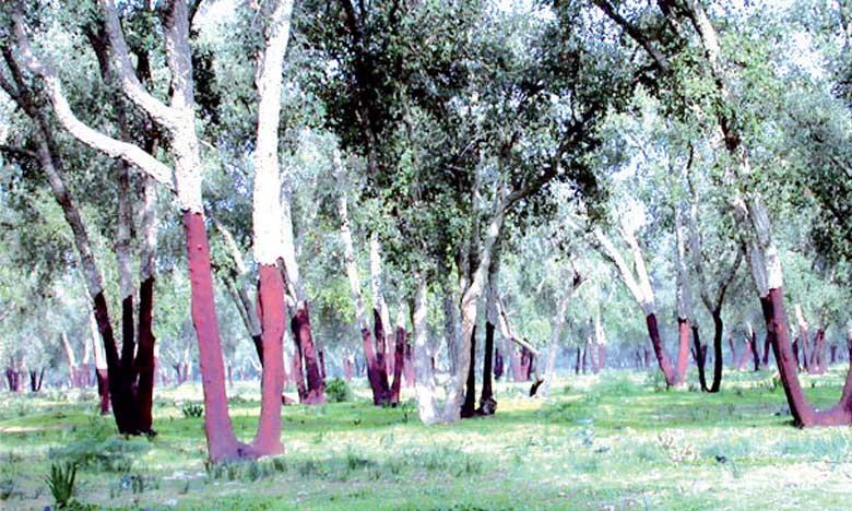 Adoption d'une approche sécuritaire pour faire face à la surexploitation des ressources forestières