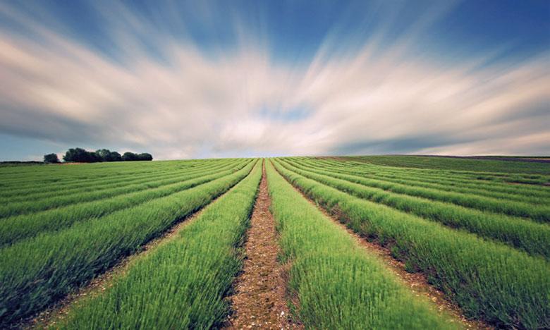 Des mesures pour assurer  une bonne campagne agricole