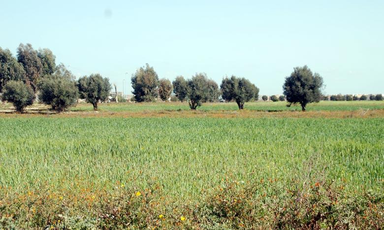 Les dernières précipitations auront un impact positif sur la campagne agricole
