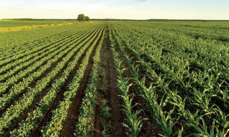 Des opportunités à explorer  en dehors de l'agriculture